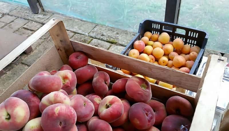 Frutta biologica appena raccolta