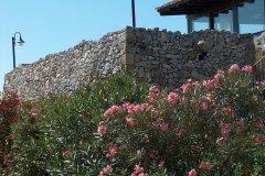 Oleandri in fiore su pietra a secco