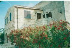 Oleandri in fiore sulla calda pietra locale